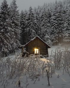 Just a glowy light in a tiny, cozy cabin. Snow and trees surround to make this a perfect winter wonderland. Winter Cabin, Cozy Cabin, Winter Snow, Winter Time, Cozy Winter, Snow Cabin, Snow Fun, Winter Night, Cozy Cottage