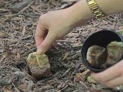 Pianta in giardino le bustine del tè usate, quando saprai il perchè lo farai anche tu!! - Pagina 2 di 2 - Meteofan