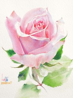 Rose Drawing Watercolor without drawing by LaFe Watercolor Flowers Tutorial, Watercolor Rose, Pencil Colour Painting, Pencil Drawings Of Flowers, Watercolor Painting Techniques, Plant Drawing, Flower Clipart, Flower Art, Instagram