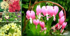 Hay muchas flores que no necesitan de pleno sol para lucir hermosas y brillantes, aquí varias opciones ⛅️