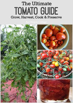 The Ultimate Tomato Guide - Growing & Harvesting with Cooking & Preserving recipes! An Oregon Cottage