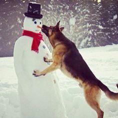 I love German Shepherds and Snowmen!  Perfect Combination!