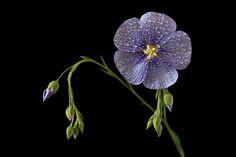 Fotografía BLUE por Vendenis   en 500px