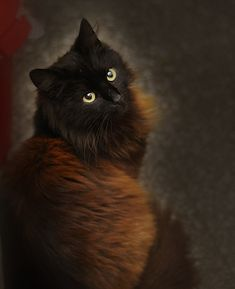 """""""Cats invented self-esteem.  There is not an insecure bone in their body."""" --Erma Bombeck"""