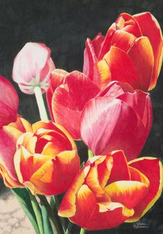 colored pencil work by Dianna Wallace Soisson Colored Pencil Artwork, Pencil Painting, Coloured Pencils, Color Pencil Art, Watercolor Disney, Watercolor Flowers, Watercolor Art, Pencil Drawings, Art Drawings