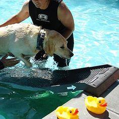petstep-pet-ramp-pool-leg-kit-dog
