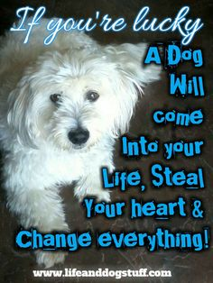 Dog quotes pet quotes inspirational quotes dog quotes and sayings Short Dog Quotes, Best Dog Quotes, Cute Dog Quotes, Pet Quotes Dog, Phteven Dog, Dog Quotes Inspirational, I Love Dogs, Cute Dogs, Animals And Pets