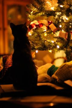 Christmas Kitty Yeah this is what it should be like. but the cat is normally IN the tree. Christmas Abbott, Merry Christmas, Christmas Post, Christmas Animals, Little Christmas, Winter Christmas, Christmas Lights, Christmas Kitty, Christmas Snowflakes