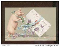 Ansichtskarten > Motive > Tierwelt & Fauna > Schweine - Delcampe.net