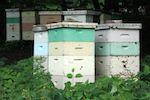 Skapad den söndag, 29 april 2007 07:34   Skriven av Magnus Ehinger   - A garden needs Bees!