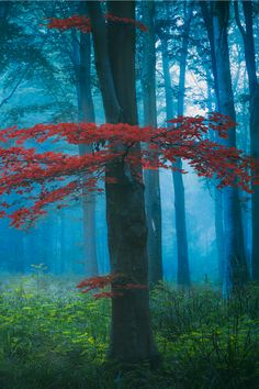 "I don't know how to ""reblog""., tulipnight: Mist in the Woods Somerset by Artur..."