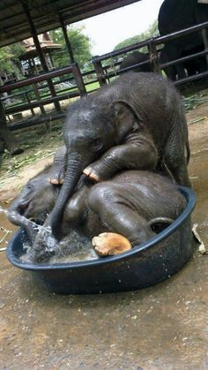 Cute elephants bathing