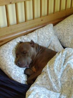 a comfy cozy sleep. (the way every rescued dog should live out the rest of their lives).