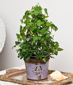 17. English Ivy.  English ivy is commonly grown outdoors, but growing ivy indoors is possible. As a houseplant, ivy is very easy to maintain. Choose a beautiful planter that'll complement it.  Tip: Keep the pot in a spot that receives bright indirect sun.
