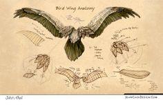 anatomy of birds drawing Wing Anatomy, Anatomy Drawing, Animal Sketches, Animal Drawings, Wings Drawing, Human Figure Drawing, Bird Wings, Art Studies, Dark Souls