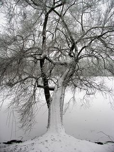 magical - halasi  zsolt.   Wonderful nature magical scene.