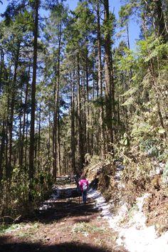 Título de la obra: Conectando con la naturaleza. Autor: Treisy Valeria Guardado Romero. 12/3/2016 Apertura de diafragma: f/6.3 Velocidad de obturación: 1/100s ISO: 160
