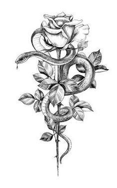 vintage tattoo Hand drawn twisted Snake with rose on high stem isolated on white. Pencil drawing monochrome serpent and flower. Floral vertical illustration in vintage style, t-shirt design, tattoo art. Vintage Tattoos, Vintage Blume Tattoo, Vintage Flower Tattoo, Snake Painting, Snake Drawing, Snake Art, Snake Sketch, Kunst Tattoos, Tattoo Drawings