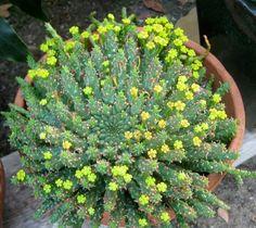 A bushel of cacti.