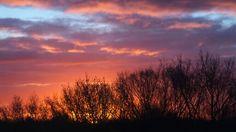 Anita Celestial, Sunset, Outdoor, Seeds, Sunsets, Outdoors, The Great Outdoors, The Sunset