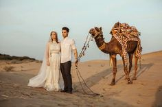 TBH, a camel is probably a better wedding guest than that uncle who gets too drunk and makes inappropriate toasts.