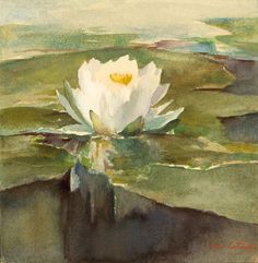 John La Farge, Water Lily in Sunlight