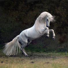 impressivepowerfulhorses-16