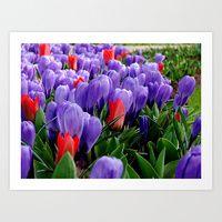 Keukenhof Flowers Art Print by Carolyn Jones   Society6
