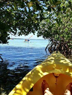 Kayaking the mangroves at Fort De Soto Park. #50Views