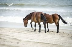 North Carolina coast: the best beaches, hotels and restaurants