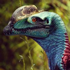 Dilophosaurus (Birds Are Dinosaurs) Image DinoEsculturas. Looks much like a Cassowary, lrg flightless bird in New Guinea & Australia, in danger of extinction. Prehistoric Dinosaurs, Prehistoric World, Prehistoric Creatures, Mythical Creatures, Dinosaur Images, Dinosaur Art, Feathered Dinosaurs, Historia Natural, Spinosaurus