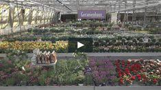 """Das ist """"Hödnerhof - Blumenhaus Blumen 2021"""" von """"TO-BE.MEDIA - Filmagentur"""" auf Vimeo, der Seite für hochwertige Videos und alle,… Videos, Plants, Geraniums, Glass House, Flowers, Plant, Planets"""