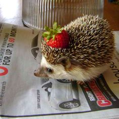 Hedgehog with a fancy strawberry hat!