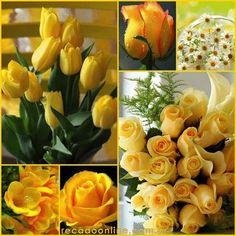 photo lindas rosas amarelas_zpskzv18qgu.gif
