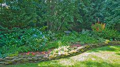 The Best Shrubs for Shade Gardens