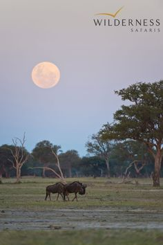 Wilderness Safaris – Last drink of the day in Hwange National Park #Africa #Safari #Zimbabwe