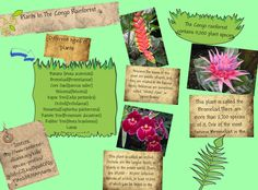 congo rainforest plants - Google 検索