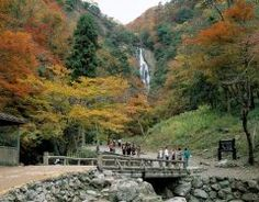 岡山県真庭市にある神庭の滝自然公園  日本の滝百選にも選ばれた西日本最大級の名瀑神庭かんばの滝は落差は110m水量も豊かで素晴らしい瀑布を見られますがこちらは猿でも有名です  餌付けされている野生の猿が遊歩道のそこかしこに姿を見せ可愛い仕草と野趣あふれる景色を楽しめます 秋の紅葉も見事ですよ  tags[岡山県]