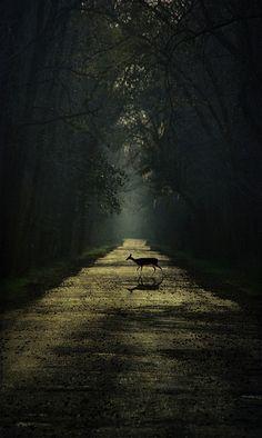 still, my deer