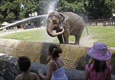 elephants keeping cool | pb-110713-cool-elephant-ps.jpg