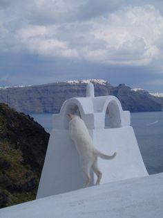 Oia, Santorini White cat & house
