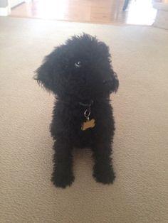 9 weeks old! Jackson, Guys, Dog, Animals, Diy Dog, Animais, Animales, Animaux, Doggies