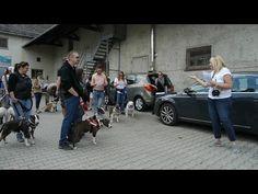 4.ter Münchner Bulliwalk (4th munich bullywalk) - YouTube Munich, Videos, Youtube, Youtubers, Youtube Movies