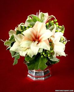 Amaryllis are tropical plants, native to South America, that will make a beautiful and simple addition to your home during the holidays.