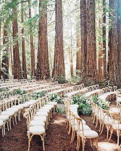 Rustic boho outdoor forest woodland wedding ceremony decor [tps_header][/tps_header] Ah, the great outdoors. Excellent for hiking, biking, and… hosting the perfect wedding. Forest weddings are super dreamy and so much Best Wedding Venues, Wedding Ceremony Decorations, Wedding Bells, Wedding Ideas, Ceremony Backdrop, Outdoor Wedding Ceremonies, Woods Wedding Ceremony, Lilac Wedding Themes, Outdoor Wedding Seating