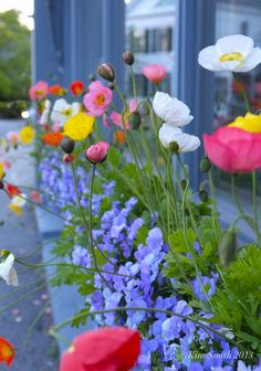 Iceland Poppies Driving home at dusk and coming from a client's in Beverly Farms, I passed this gorgeous poppy-filled window box at Gladstone's jewelry shop on Union Street in Manchester, and just. Wild Flowers, Beautiful Flowers, Exotic Flowers, Purple Flowers, Icelandic Poppies, Flower Seeds, Flower Boxes, Garden Inspiration, Design Inspiration