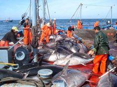 Recubrimiento natural conserva la carne de pescado