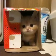 Perfect hideout for kitten's anti-social tendencies Cute Baby Cats, Kittens And Puppies, Cute Little Animals, Cute Cats And Kittens, Cute Funny Animals, Kittens Cutest, Cute Puppies, Cute Dogs, Cute Animal Videos