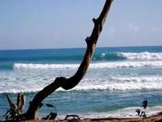 Cabarete, Dominican Republic...need to go surf at Playa Encuentro asap!