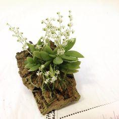 Miniature orchid by kurtvonnecat Minis, Mini Orquideas, Orchid Terrarium, Miniature Orchids, Growing Orchids, Orchidaceae, Green Plants, Ikebana, Plant Care